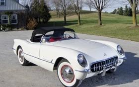 Картинка белый, деревья, Corvette, Chevrolet, 1953, спорткар, кабриолет