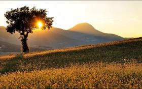 Обои солнце, лучи, дерево, холмы, утро, склон