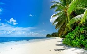 Обои море, облака, пейзаж, природа, тропики, пальмы, sea