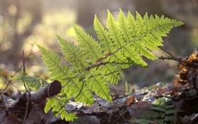 Картинка зелень, лес, листья, земля, папоротник, веточки