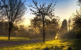 Картинка дорога, зелень, лето, трава, лучи, свет, деревья