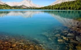 Картинка лес, горы, озеро, камни, берег, Myosotis Lake, нацинальный парк
