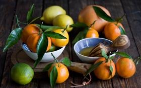 Обои мандарины, листья, фрукты, цитрус