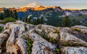 Обои деревья, горы, природа, вид, панорама