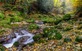 Картинка осень, лес, листья, река, камни, мох, поток
