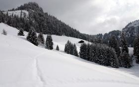 Обои небо, деревья, пейзаж, горы, природа, Швейцария, ели