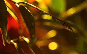 Обои макро, зеленые, капли воды, macro. листья