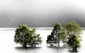Картинка деревья, пейзаж, природа, туман, река