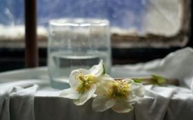 Обои цветы, стакан, окно