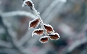 Обои листья, снег, зима, холод, иней
