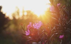 Картинка листья, солнце, цветы, растение