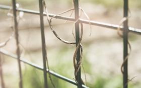 Картинка забор, растение, ограда, прутья