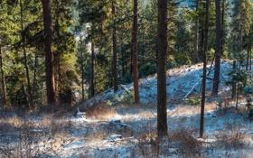 Картинка зима, лес, снег, сосны, сша, штат вашингтон