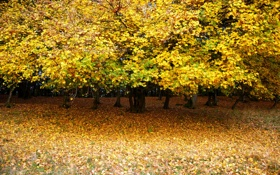 Картинка осень, листья, деревья, парк, поляна, желтые