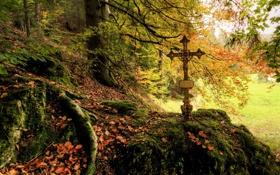 Обои осень, лес, листья, природа, фото, мох, крест