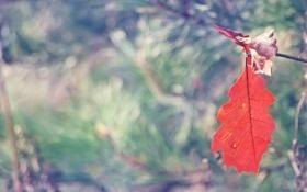 Обои осень, красный, лист, фокус, размытость