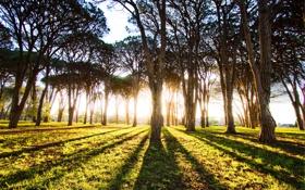 Картинка свет, деревья, тени