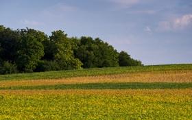 Обои поле, лес, растения, сша, облачность, штат айова
