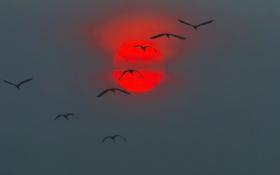 Обои закат, птицы, небо, солнце