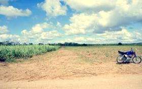 Обои солце, поле, тростник, байк