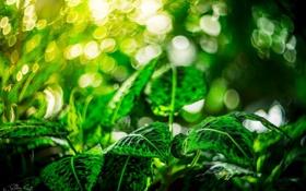 Обои листья, свет, зеленый, блики, макро