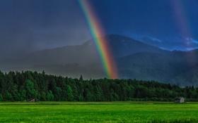 Обои лес, горы, радуга, Германия, Бавария, луг, Germany