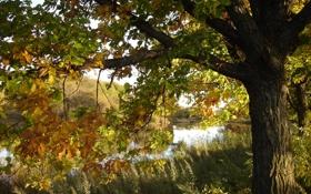 Обои осень, природа, река, дубы