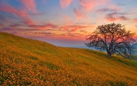 Обои поле, закат, цветы, дерево, холмы, поляна