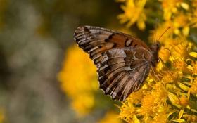 Картинка цветы, фон, бабочка, крылья, желтые