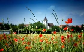 Картинка стебель, церковь, поле, небо, цветы