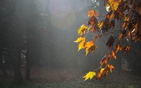 Картинка листья, природа, туман