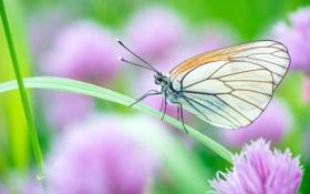 Картинка трава, макро, насекомые, природа, бабочка
