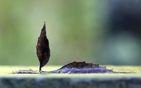 Обои осень, листья, макро, фото, листок, осенние фото, лисики