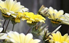 Обои макро, цветы, природа
