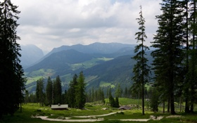 Обои лето, горы, ели, долина, германия