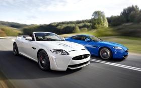 Картинка белый, небо, деревья, синий, купе, Jaguar, ягуар