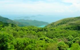 Обои небо, деревья, фото, листва, пейзажи, фокус, леса