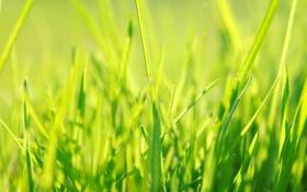 Обои зеленый, весна, трава