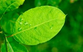 Обои лето, капли, лист, листок, влага, ветка, зеленый лист