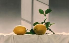 Обои скатерть, тень, лимоны, фрукты, Yingzhao Liu, арт, окно