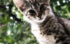 Обои полосатый, кот, зелень, боке, кошка