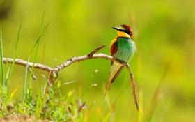 Картинка лето, макро, цветы, природа, птица, ветка, окрас