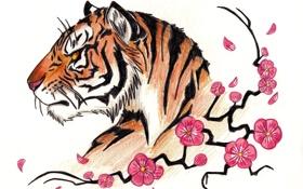 Обои сакура, карандаш, тигр