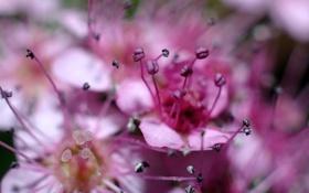 Обои макро, цветы, прелесть