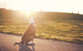 Картинка свет, друг, собака