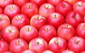 Обои много, яблок, спелых