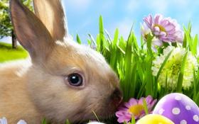 Картинка весна, easter, трава, meadow, луг, пасхальный, ромашки