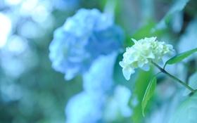 Картинка белый, цветок, листья, цвета, макро, свет, блики
