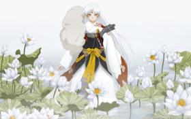 Картинка цветы, арт, парень, лотосы, cilou, sesshomaru, inuyasha