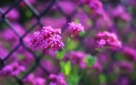 Картинка цветы, яркие, забор, фокус, решетка, много